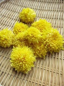 エディブル・フラワー 食用菊 秋 黄色 野菜