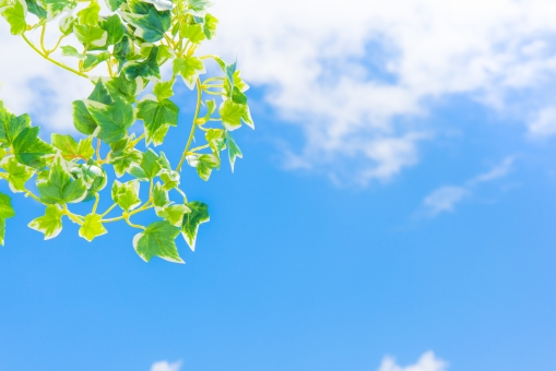 グリーン 若葉 青空 空 雲 太陽 爽やか さわやか コピースペース 春 リラクゼーション リラックス 緑 青 ブルー 水色 夏 秋空 葉 風景 初夏 光 明るい イメージ 健康 清々しい みどり 背景 壁紙 背景素材 自然 テキストスペース 植物 樹木 木 素材 バック バックグラウンド 背景写真 葉っぱ 景色 新緑 クリーン リフレッシュ