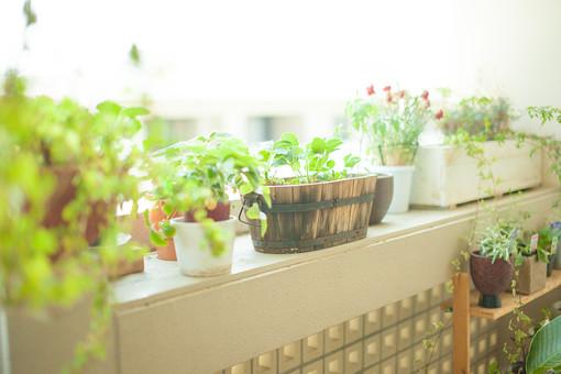 自然 植物 葉 葉っぱ 緑 観葉植物 観賞 花 植木鉢 プランター 入れ物 並べる 飾る ディスプレイ 棚 出窓 窓辺 ぼやける ピンボケ 成長 育つ 多い 沢山 不揃い 加工 アップ 無人 屋内 室内 景観