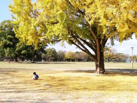 銀杏木とこどもの写真