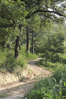 自然 田舎 山道 樹木 樹 木 枝 幹 植物 葉 葉っぱ 雑草 野草 道 景色 風景 森 林 森林 交通 土 田舎道 地面 草 野生