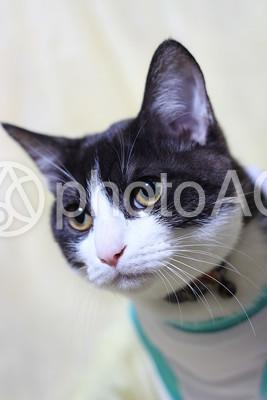 白黒の猫3の写真