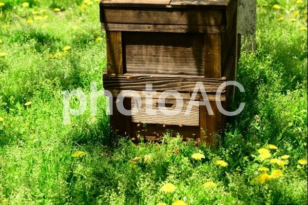 ミツバチの巣箱の写真