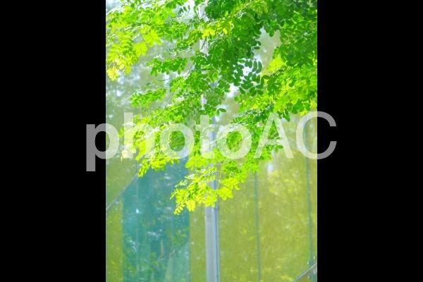 街中の木漏れ日の写真