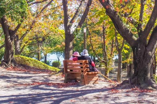 老夫婦 木陰 休む ひとやすみ 休憩 カップル 公園 ベンチ 森林 老人 散歩 紅葉 木漏れ日 休日 昼間 落ち葉 デート くつろぎ 男性 女性