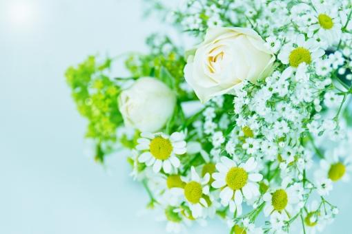グリーン 緑 植物 自然 花 バラ ばら 薔薇 華やか 豪華 ゴージャス アップ エレガント 可愛い かわいい 可憐 ローズ 白 白薔薇 白バラ カモミール ハーブ 観葉植物 ブーケ 背景 壁紙 水色 花束 光 輝き