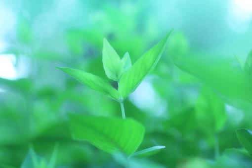 木陰 散歩道 ひだまり 日だまり 葉っぱ 新芽 新緑 スポットライト ハイキング ピクニック 涼しい 深呼吸 緑 グリーン のんびり 木漏れ日 こもれび 熱中症 ゆっくり 若葉 青葉 自然 光 太陽 風景 バックグラウンド 爽やか キラキラ 背景デザイン ナチュラル 幸せ カード メッセージ 背景 壁紙 植物 春 初夏 夏 メッセージカード 背景素材 素材 フレーム コピースペース スペース テキストスペー