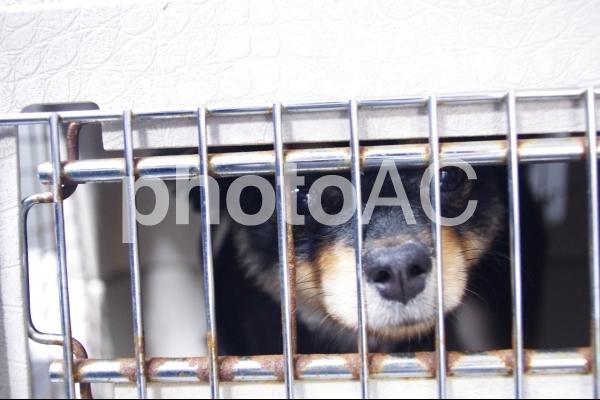 不安げな犬の写真