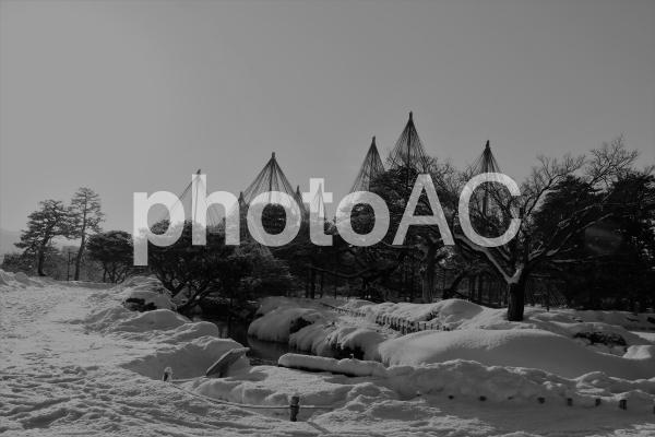雪吊り モノクロの写真