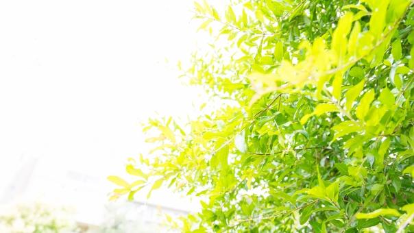 木漏れ日 クリーン フレッシュ エコロジー 木 リーフ 葉 太陽 緑 グリーン 壁紙 背景 植物 光 明るい ライト