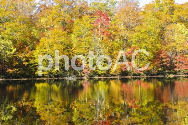 刈込池の紅葉の写真