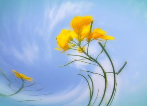 花 黄色 植物 歪み 曲がる