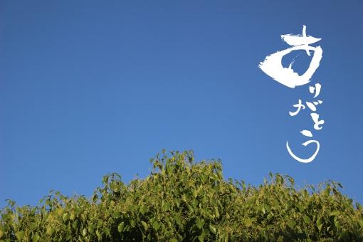 ありがとう 木 空 青空 雲が無い空 6月 緑 青 あお みどり 白文字 文字入れ 文字入り 筆文字 手書き