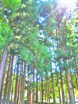 自然 しぜん 風景 景色 田舎 のどか ゆっくり 散歩 さんぽ 晴れ 晴天 青空 青い ブルー 空 そら スカイ スカイブルー 水色 みずいろ 太陽 ひかり 日光 陽射し 輝き きらきら 山 木 杉の木 みどり 緑 グリーン 癒し リラックス 深呼吸 空気 風 気持ちいい さわやか リフレッシュ 木漏れ日