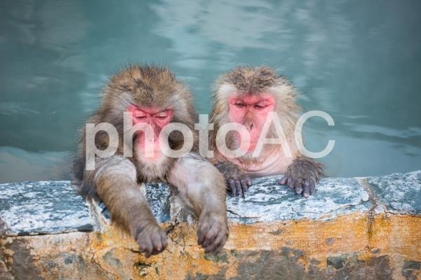 サルと温泉の写真