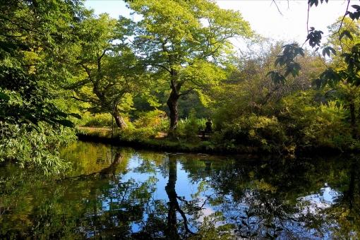 軽井沢 池 緑 湖面 幹 枝 反射 対称