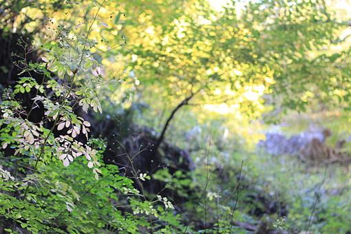 日本 国内 関東 関東山地 観光地 野外 ハイキング 森林浴 トレッキング 登山 山登り 登山道 山 野外 アウトドア 自然 風景 植物 樹木 木立 林 森林 広葉樹 下草 茂み 葉 木の葉 緑 黄緑 逆光