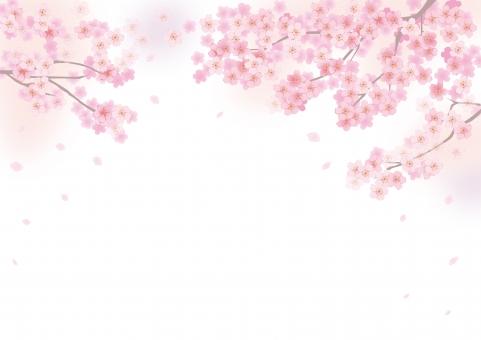 桜 さくら サクラ バックグラウンド テクスチャ 背景 フレーム ピンク 満開 花びら 花吹雪 桜吹雪 イメージ 卒業 入学 上品 お花見 初春 年賀状 メッセージカード メッセージ カード 結婚式 招待状 テンプレート 壁紙 イラスト グラフィック 卒業式 入学式 きれい 綺麗 かわいい 白背景 余白 白バック 3月 3月 4月 4月 季節感