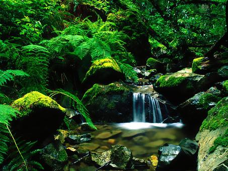 山奥に流れる水の写真
