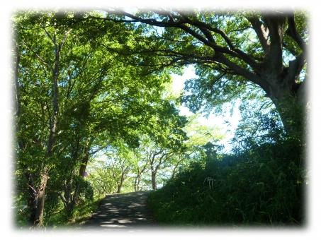 木陰 道 散歩 日差し 木漏れ日 こもれび 川 緑 木 犬 晴天 夏 7月 8月 9月 残暑 素材 背景 はがき ポストカード グリーティング コピースペース 光 風景 こかげ 日陰 ひかげ 涼 熱中症 日焼け防止 空