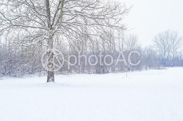 雪景色68の写真