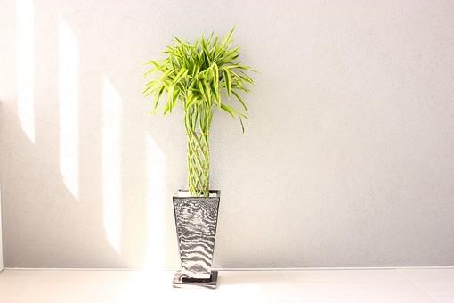 ビジネス 仕事 会社 ビル 部屋 建物 建築 建築物 会社員 社会人 ビジネスマン 社員 壁 観葉植物 緑 葉 葉っぱ 自然 植物 植木鉢 プランター 置物 ディスプレイ 癒し ナチュラル 太陽 太陽光 陽射し 無人 屋内 室内 会議室 休憩室 客室 応接室 社長室