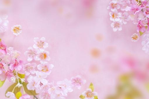 春色の背景の写真