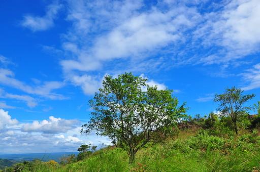 自然 植物 草 葉 葉っぱ 緑 木 樹木 幹 枝 茶色 草 野草 野生 雑草 鬱蒼 集まる 密集 育つ 成長 伸びる 生える 枯れる 丘 山 崖 海 水 海水 水面 水平線 空 雲 青い 白い 晴天 青空 天気 グラデーション 鮮やか 広い 高い 壮大 広大 雄大 風景 景色 フィリピン 外国 熱帯 南国 東南アジア 島国