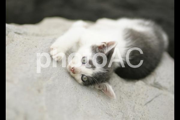 岩猫兄弟11の写真