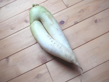 大根 大根足 ダイコン 家庭菜園 収穫 野菜 生足 生野菜 サラダ 煮物 セクシーポーズ 足 ふとめ 色白