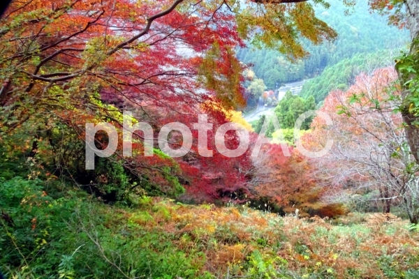 観光名所 吉野山の写真