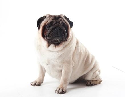 小型犬に関する写真写真素材なら写真ac無料フリーダウンロードok