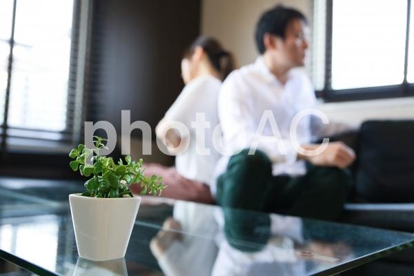 観葉植物と夫婦喧嘩のイメージ の写真