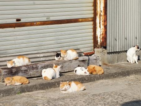 ネコ ねこ 猫 島 瀬戸内海 男木島 猫島 ネコ島 ねこ島 島猫 島ネコ 島ねこ ノラ のら 野良 ノラねこ ノラ猫 ノラネコ 野良ネコ 野良ねこ 野良猫 のらネコ のらねこ のら猫 集団 ねこあつめ ハーレム
