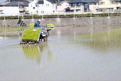 稲作 米作り 田植え1の写真