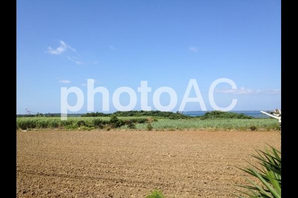 宮古島の畑の写真