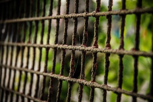フェンス 格子 鉄 金属 錆びる 劣化 酸化 古い 古びる 汚れ 自然 屋外 外 防御 警備 閉鎖 封鎖 施設 植物 樹木 庭 四角 長方形 規則 柵