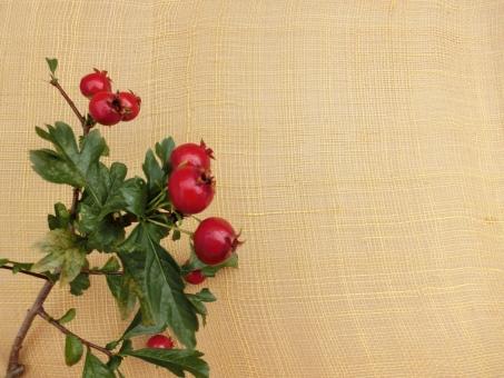 サンザシ 赤い実 枝 フレーム 背景 コピースペース 壁紙 黄色 バックグラウンド 植物 山査子 余白 イエロー ベージュ ナチュラル 自然