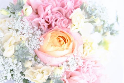 花 植物 グリーン バラ 薔薇 カーネーション ストック レースフラワー 背景 淡 光 ウエディング