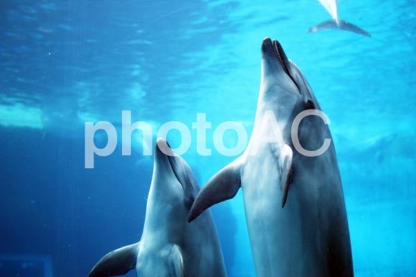 イルカの写真