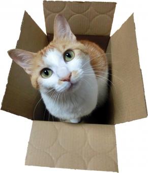 猫 ネコ ねこ キャット 切り抜き 背景白 茶白 ダンボール 空き箱 箱 箱入り 白いひげ ビックリ箱 ピンクの鼻 カメラ目線 耳 動物 段ボール箱 見上げる 首かしげ 丸い目 見つめる かわいい 家ネコ 家猫 飼い猫 室内猫 にゃらん 快適 愛猫