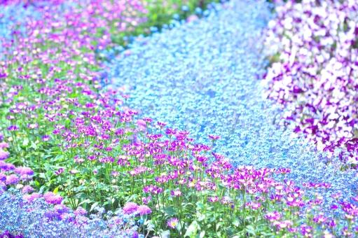 FlowerFestibalの写真