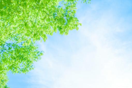 木と空の写真