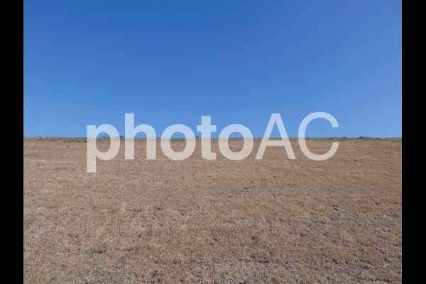 秋の河川敷 1の写真