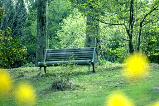 自然・風景 植物 樹木 花 緑に囲まれて 新緑 若葉 春イメージ 初夏 緑溢れて 森・林・公園 待ち受け画面 ポストカード コピースペース 背景 野外アウトドア バックグランド バックスペース 木陰 木漏れ日 休日・日曜日 休暇 夏休み リゾート 涼し気な 静かな時間 エコ・環境 新鮮な空気 木のベンチ ゆつたりと
