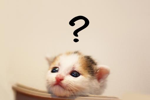 悩む子猫の写真