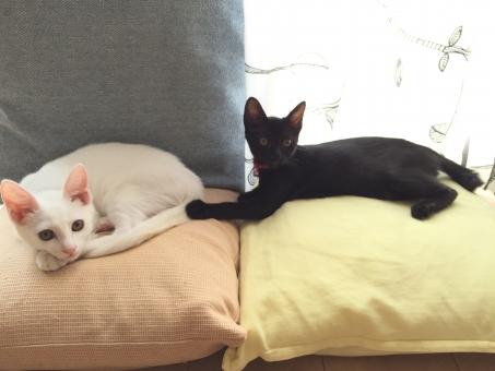 ねこ 猫 子猫 白猫 黒猫 白黒 たっち cat  blackcat whitecat