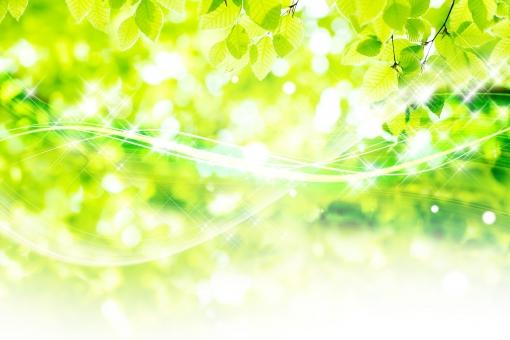 風が渡るブナ林_5の写真