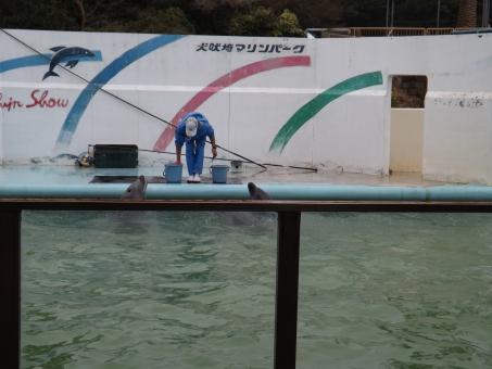 いるか イルカショ- いるかショ- 犬吠埼マリ-ンパ-ク イルカショー 海豚 海 噴気孔 肺呼吸 泳ぐ およぐ 半球睡眠 尾ひれ 上下で泳ぐ 母乳 肉食 アニマルセラピー 知性 食用 いるか追い込み漁業 アクション dolphin dolphin show 水槽 すいそう プ-ル ぷ-る かしこい 賢い スマ-ト