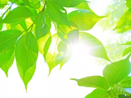 木もれ日の写真